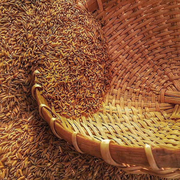cereales granos